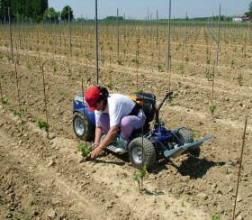 trattorino elettrico per vigne, macchine per viticoltura,macchine per agricoltura,trattorino per vigneto